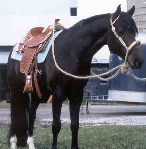 Dark Bay Horse With Blaze Dark Bay Quarter Horse...